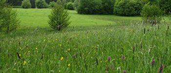 Sortie nature : les remarquables prairies du Moulin Fontaine Any-Martin-Rieux
